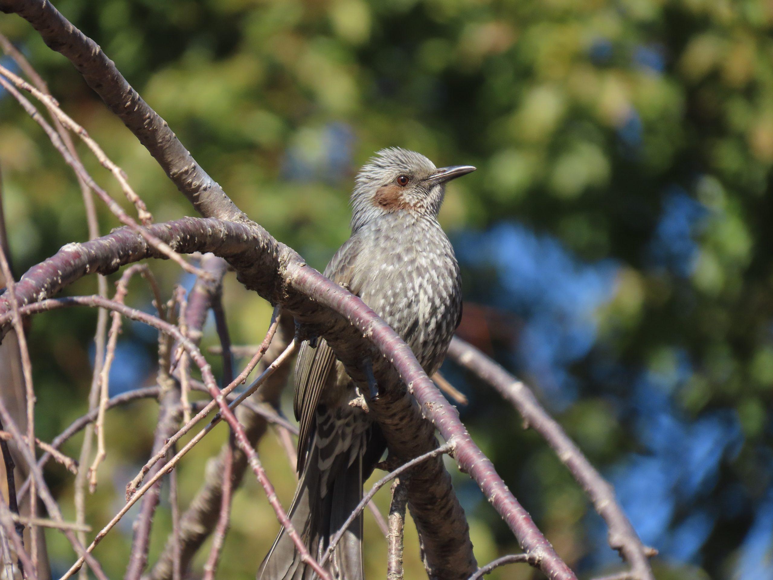 戸越公園の鳥