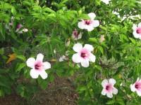IMG_flower.jpg